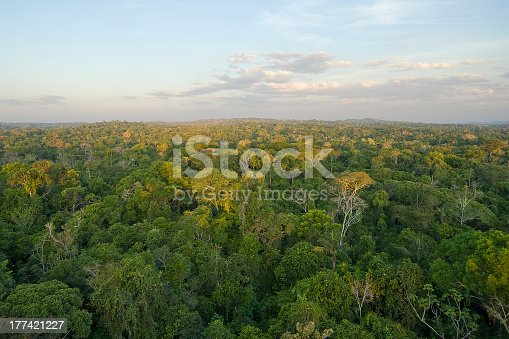 Aerial vew of the Amazon Tropical Rainforest.