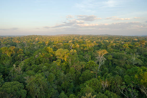 Amazon tropical rain forest Aerial vew of the Amazon Tropical Rainforest. canopy stock pictures, royalty-free photos & images