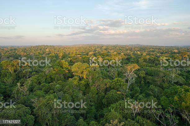Amazon Tropical Rain Forest Stock Photo - Download Image Now