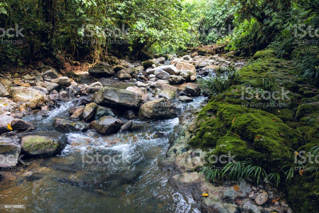 Amazon tropical rainforest in Misahualli, Napo province, Ecuador stock photo