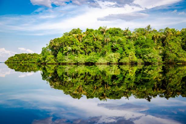 amazonas rio negro nature rio negro brazil stock pictures, royalty-free photos & images
