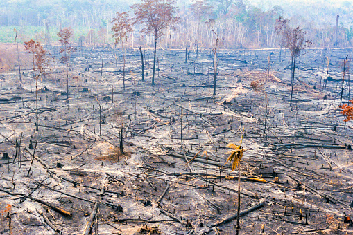 Amazonia Amazon destruction fire