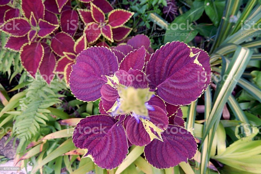 Amazonian flower royalty-free stock photo