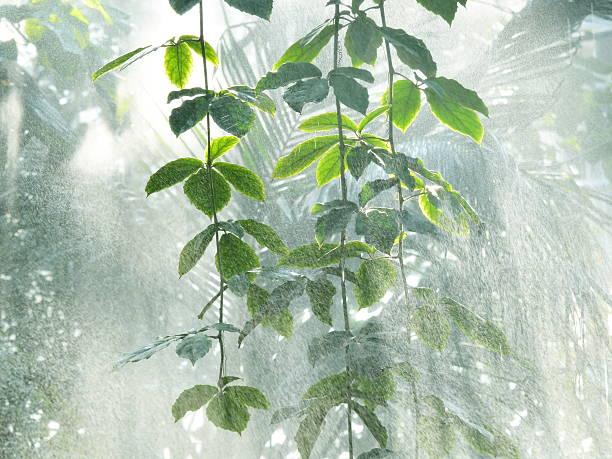 amazonian rain forest stock photo