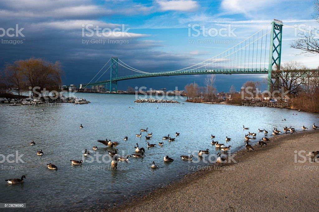 Ambassador Bridge with Geese stock photo