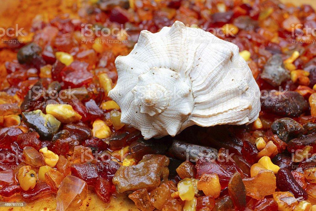 amber und seashell – Foto