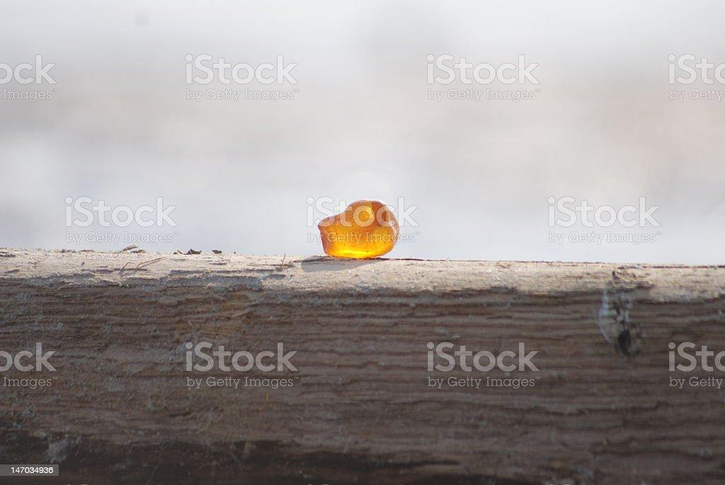 Amber durch die Nordsee – Foto