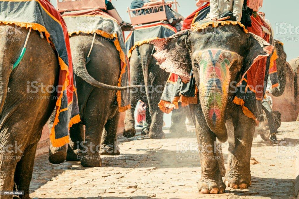 Amber Palace Indian Elephants Convoy Jaipur India royalty-free stock photo