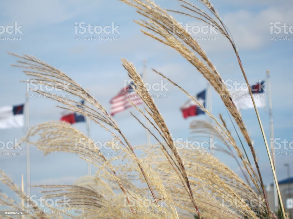 Amber Waves Of Grain Flags Stock Photo Download Image Now Istock