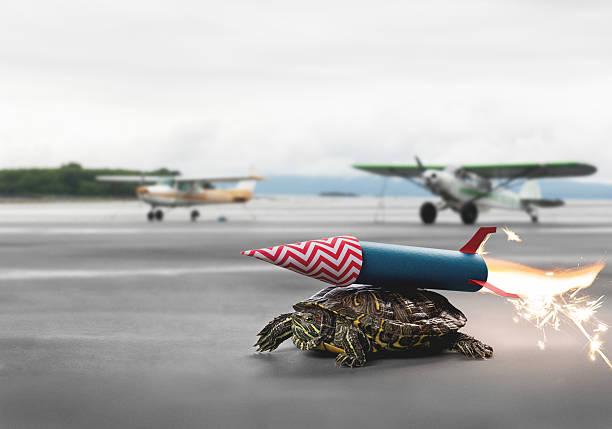 Ehrgeizige Schildkröten mit einer Rakete Abstoßkraft warten den Flug – Foto