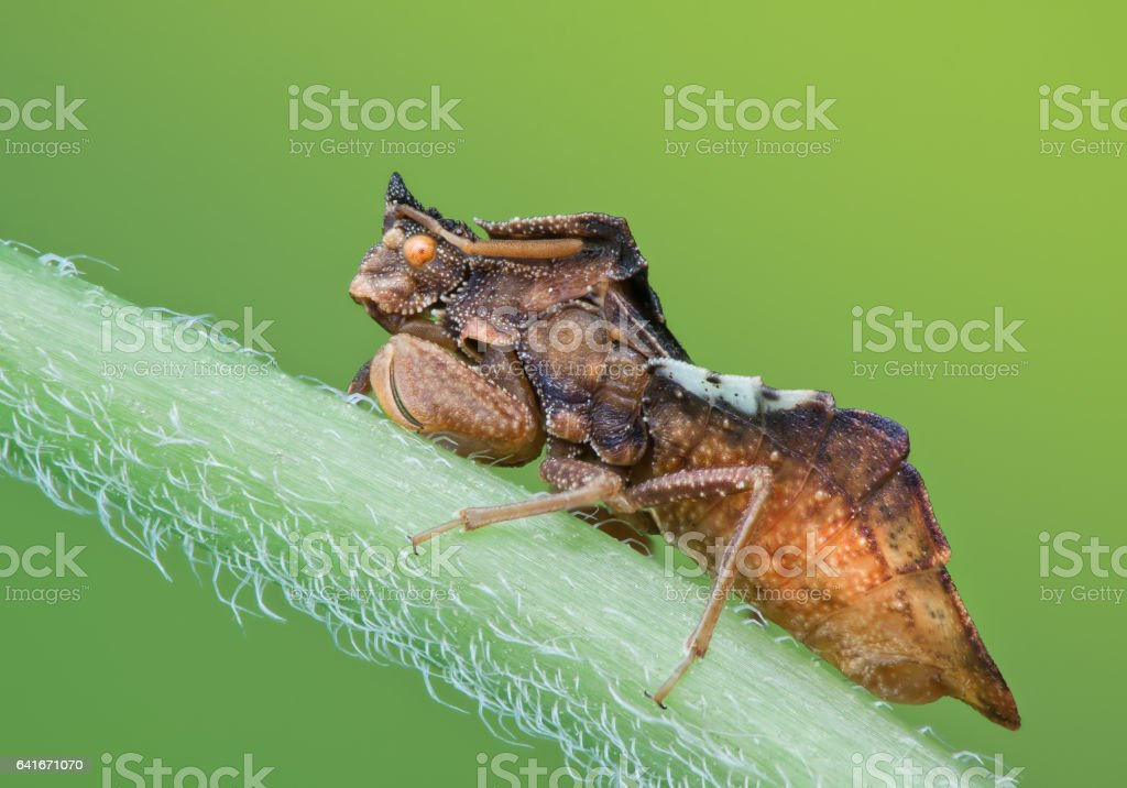 Ambushbug in nature on green background in natural light stock photo