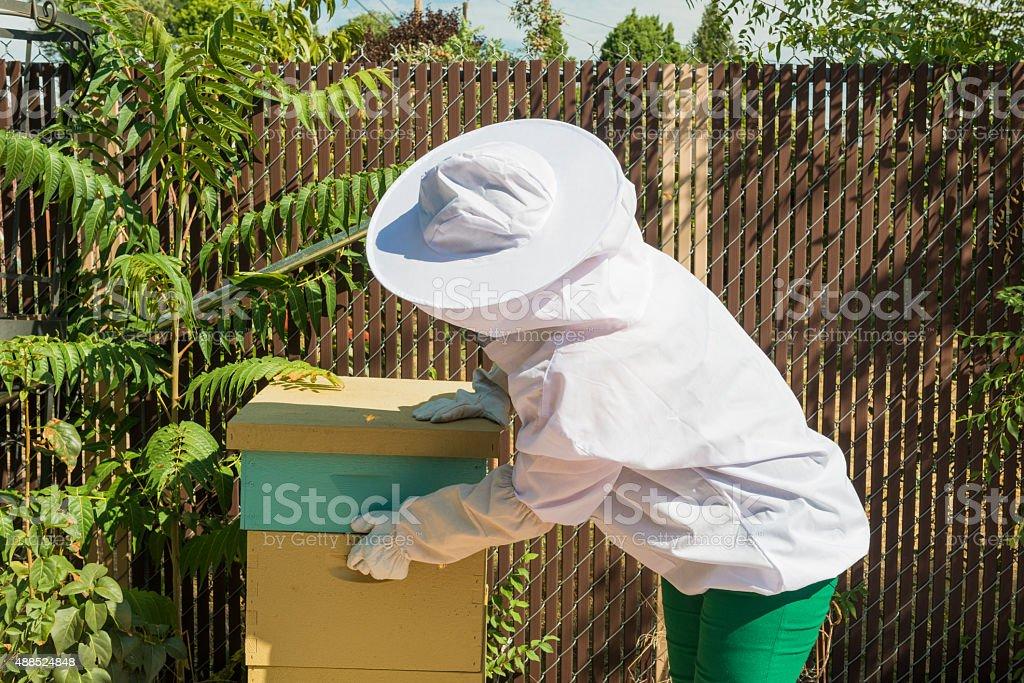 American Backyard Beekeeper Checks Organic Local Honey Beehive Home Agriculture stock photo