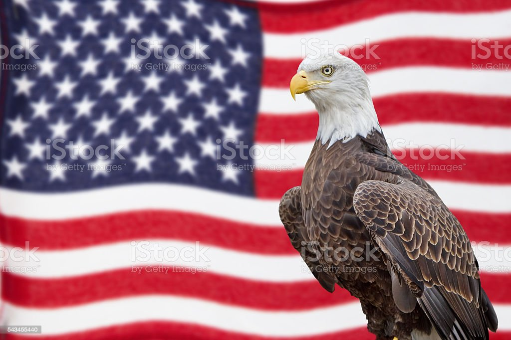 American Bald Eagle and Waving Flag stock photo