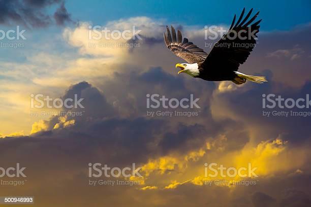 American bald eagle flying in spectacular dramatic sky picture id500946993?b=1&k=6&m=500946993&s=612x612&h=a6zsdbqow5fguoruwrc41fvo44baotsu2gnu1qov2ke=