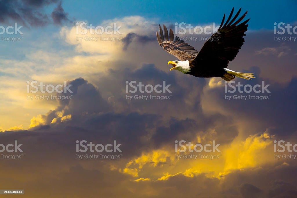 American águila de cabeza blanca volando en el espectacular cielo dramático - foto de stock