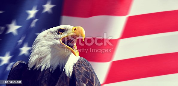 Portrait of a North American Bald Eagle (Haliaeetus leucocephalus) in the background USA flag.  United States of America patriotic symbols.