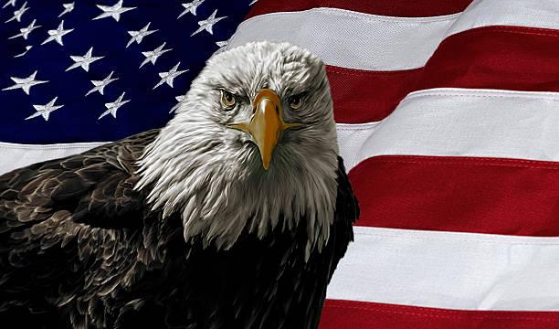 American Bald Eagle on Flag stock photo