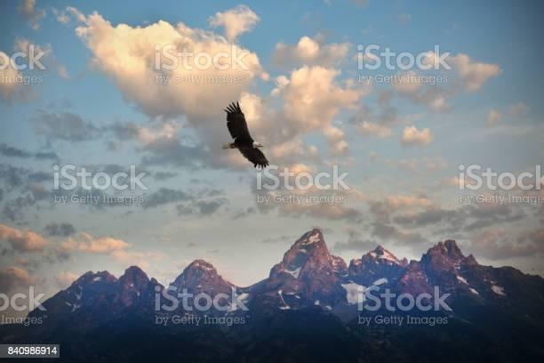 American bald eagle picture id840986914?b=1&k=6&m=840986914&s=612x612&h=p1vekrgm7bzql15uh7sy8njf5oelz4liqkbb hk gjm=