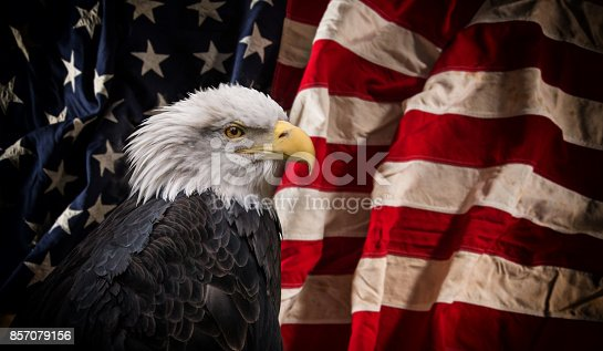 istock American Bald Eagle with Flag 857079156
