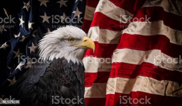 American bald eagle with flag picture id857079156?b=1&k=6&m=857079156&s=612x612&h=ocerhukuhipanbcpg0skhu2qbyxyazd2nh2pfs3avbu=
