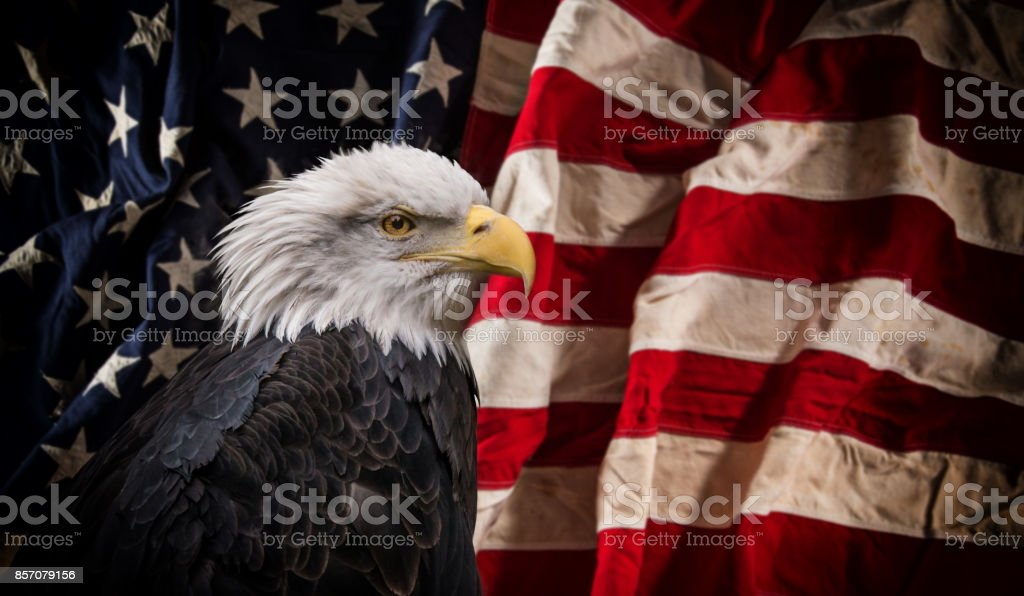 American Bald Eagle with Flag - foto stock