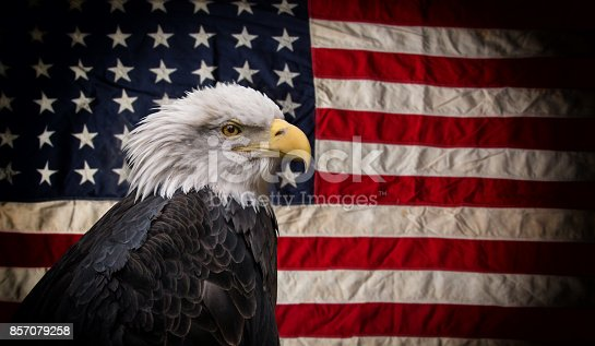 istock American Bald Eagle with Flag 857079258