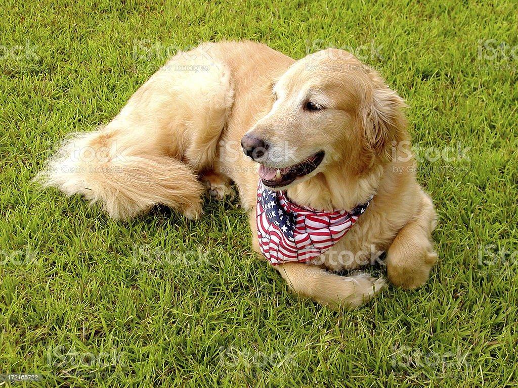 American Buddy. stock photo