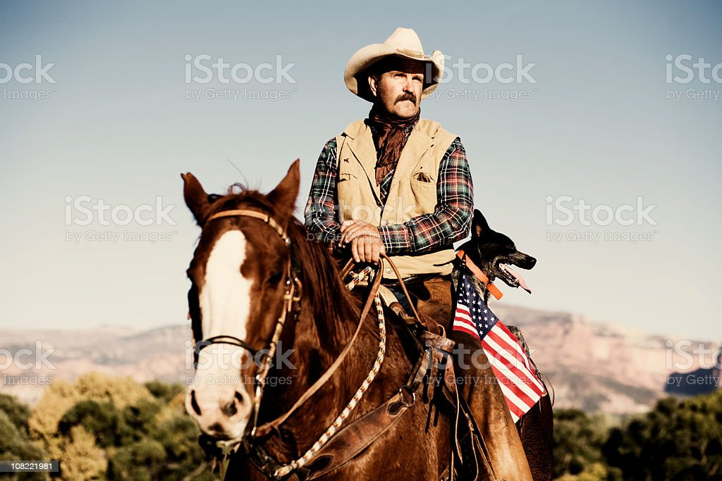 American Cattle Team royalty-free stock photo
