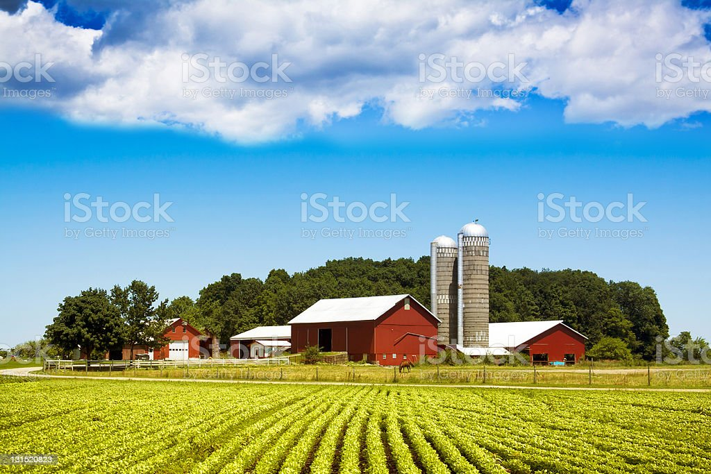 Amazing Tractor Spraying Soybean Field Stock Photo American Country Stock Photo ...