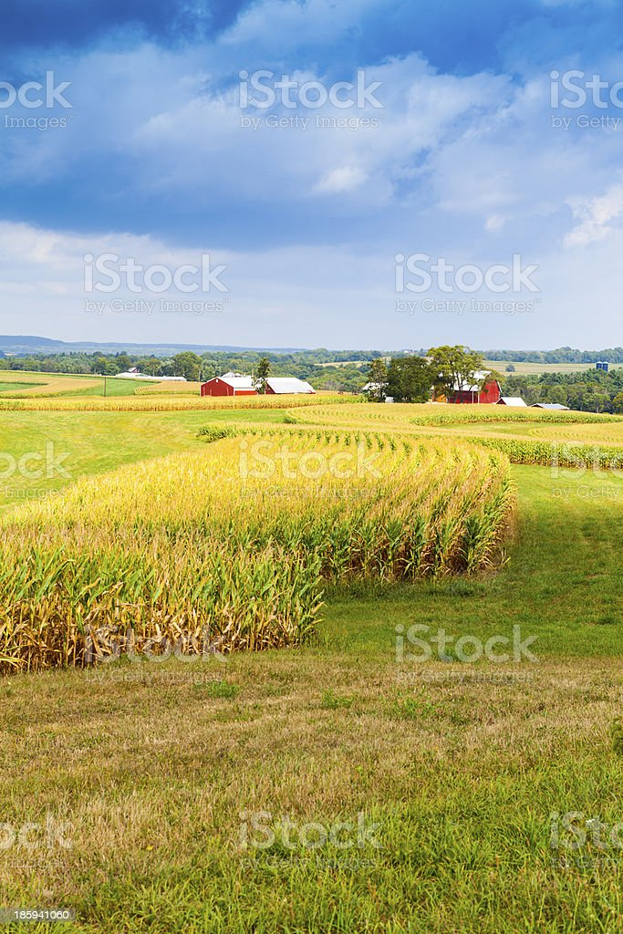 American Countryside Corn Field With Stormy Sky stock photo