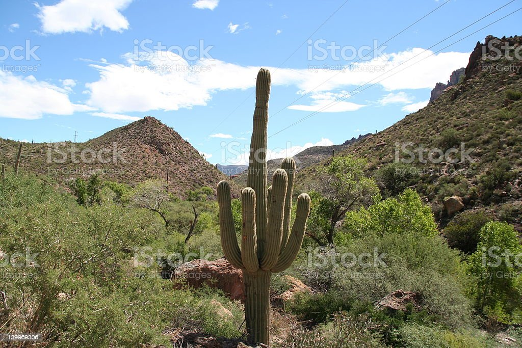 American desert 01 royalty-free stock photo