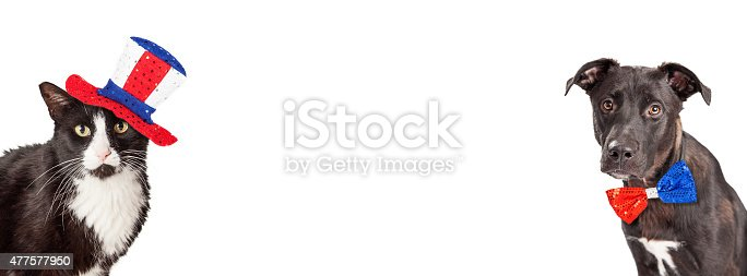 489224301 istock photo American Dog and Cat Website Banner 477577950