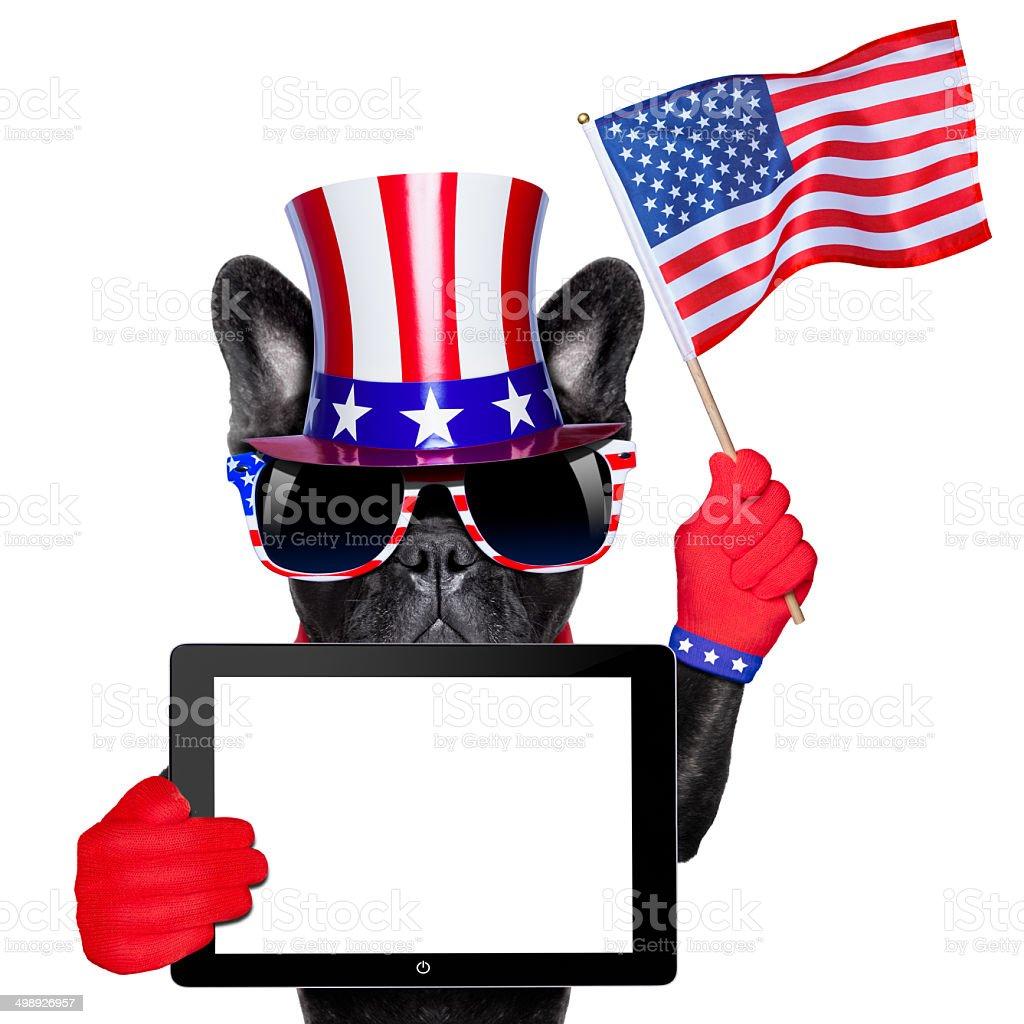 american dog stock photo