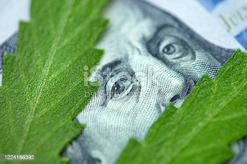 American dollar bill on cannabis leaves. Concept taxation and marijuana, tax on weed, money and pot. Cannabis finance. Revenues the marijuana industry and medical industry. Economy of hemp industry