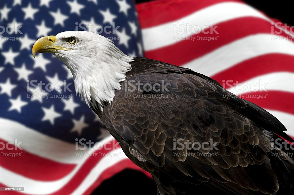 American eagle with flag stock photo