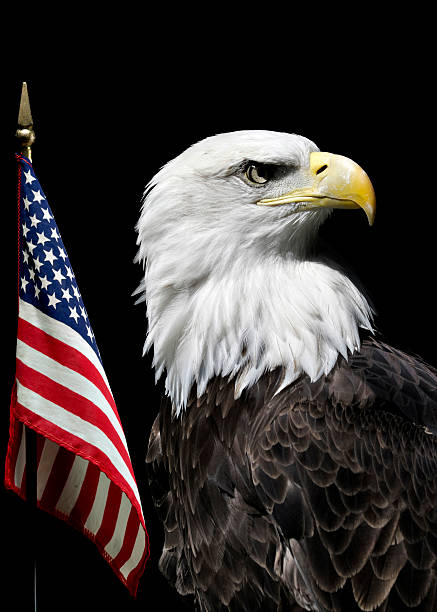 Top 30 American Flag And Bald Eagle Silhouette Stock Photos