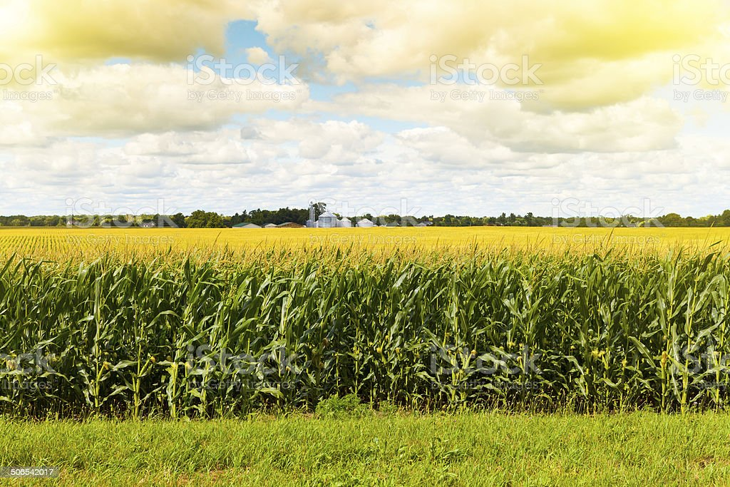 American Farmland With Blue Cloudy Sky stock photo