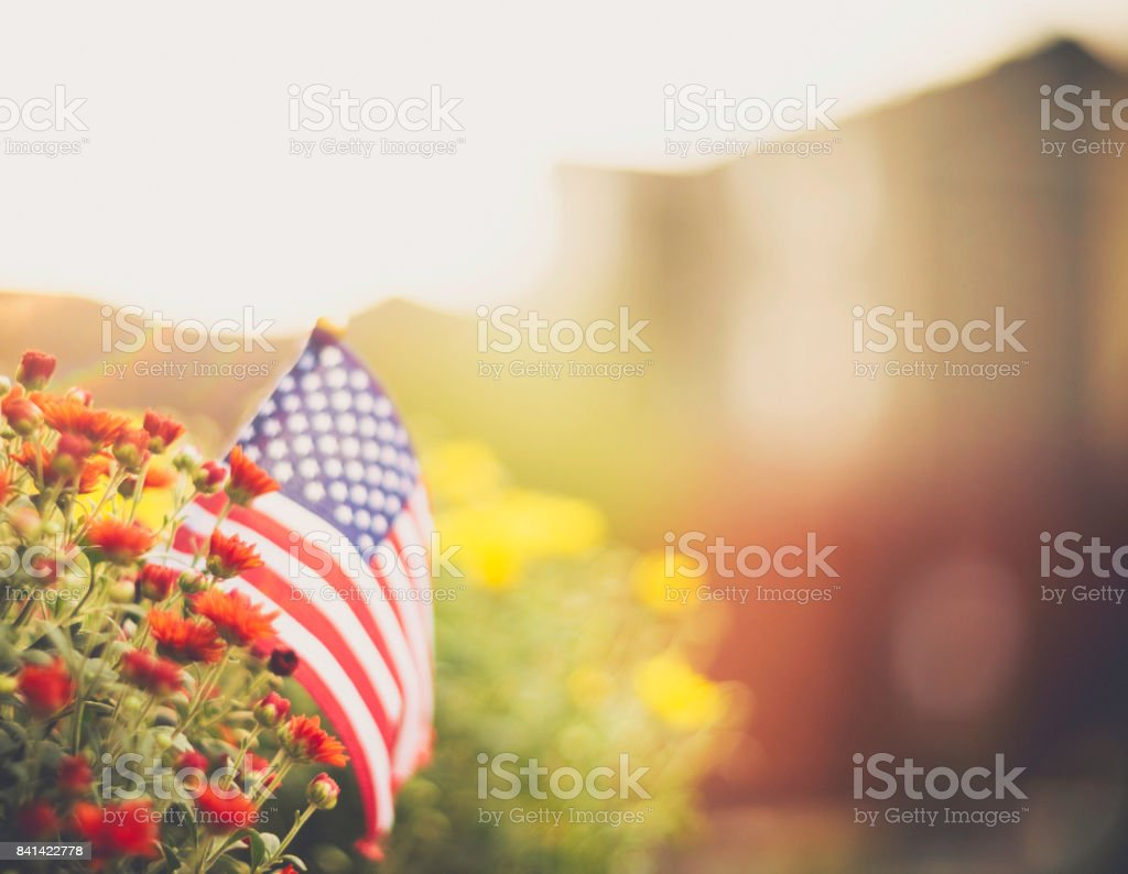 American flag background in Autumnal setting with chrysanthemums stock photo
