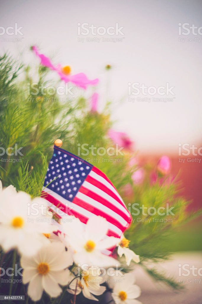 American flag background in Autumnal setting with cosmos flowers stock photo