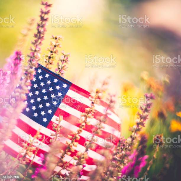 American flag background in autumnal setting with vibrant flowers picture id841422860?b=1&k=6&m=841422860&s=612x612&h=izw0toc9jhoz6x2 bdz tiltvnkqwpve8zvdaccw y8=