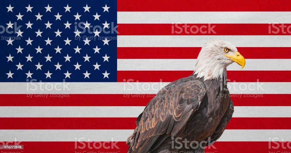 American flag, Bald Eagle, national symbols of USA stock photo