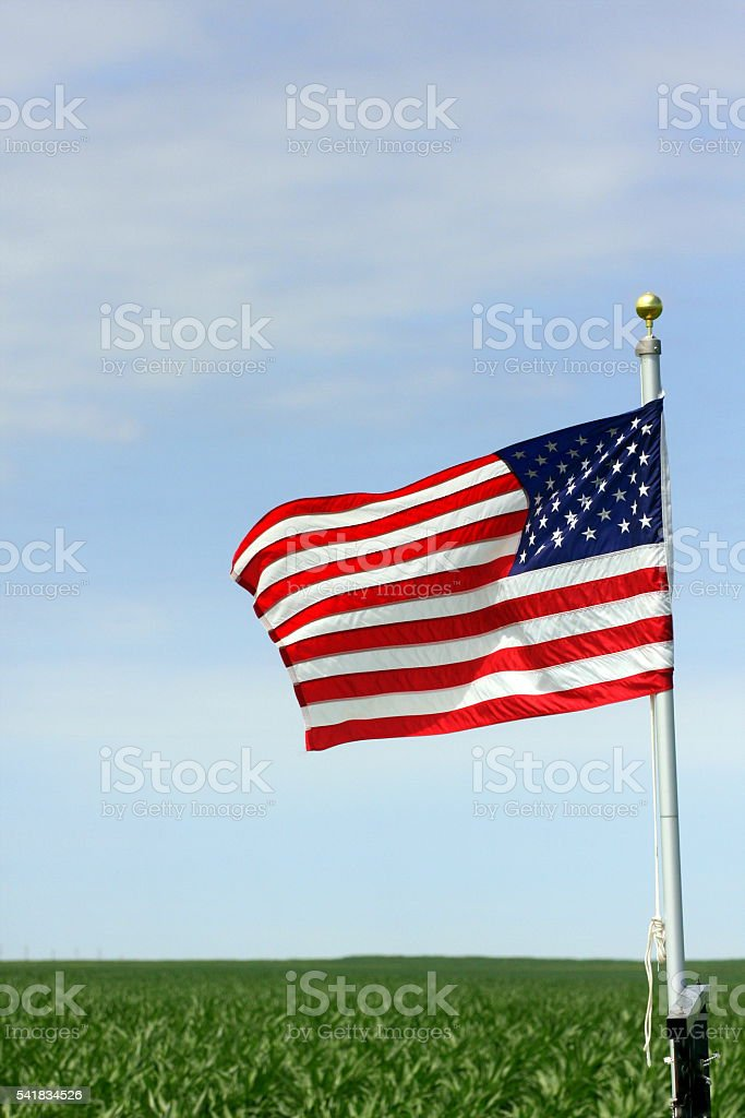 American Flag Flies Above an Iowa Cornfield stock photo