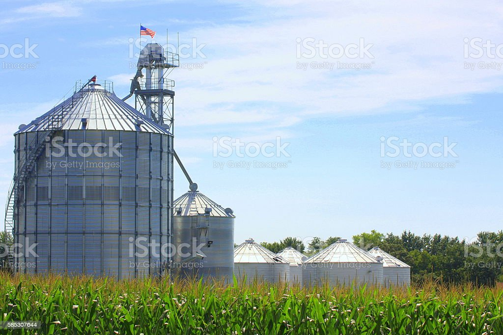 American Flag Flies on Iowa Grain Bin Near Cornfield stock photo