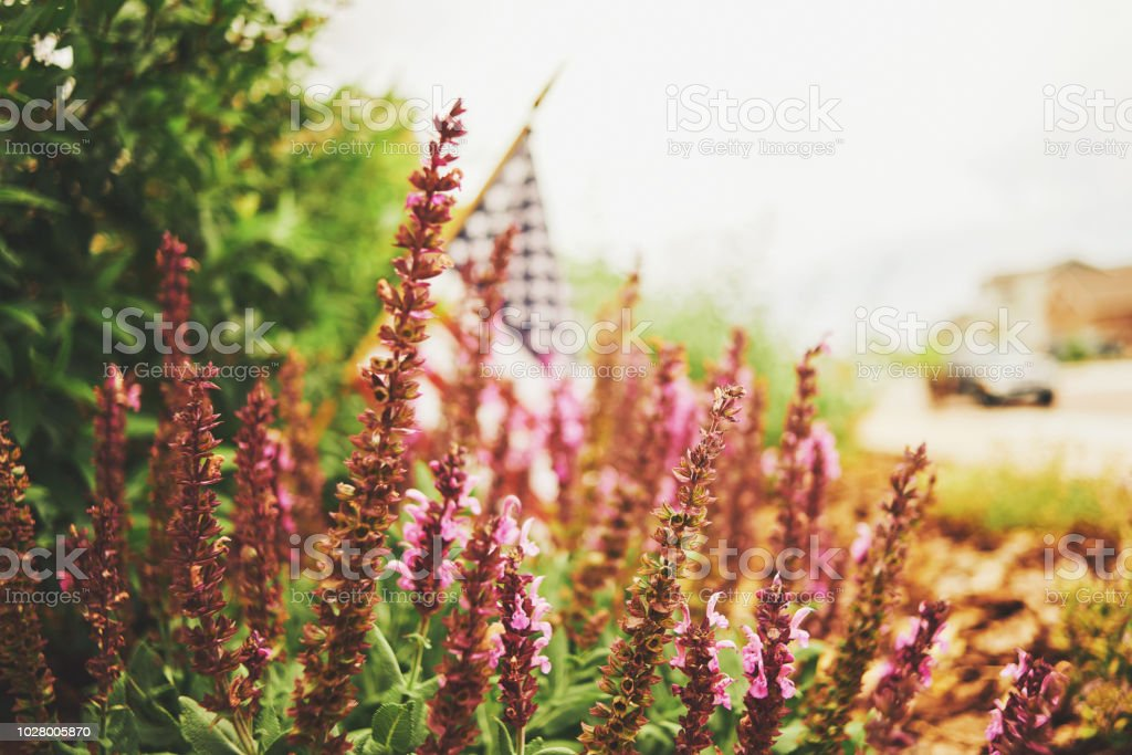 American flag in nature with warm sunlight stock photo