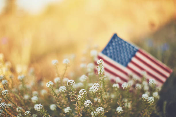 american flag in warm sunshine with wildflowers - american flag background stock pictures, royalty-free photos & images