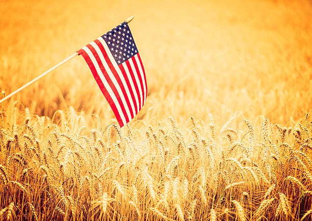 American Flag in Wheat Field stock photo