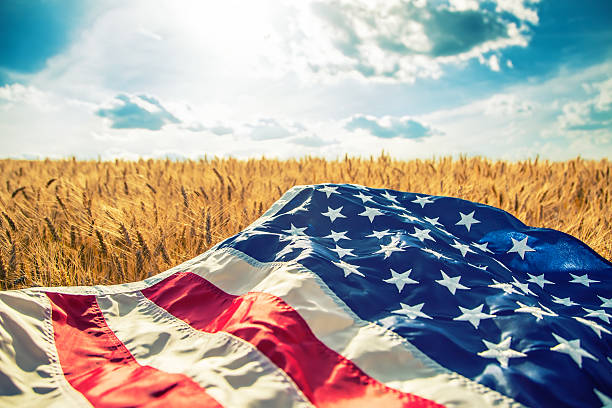 USA American flag lies on the golden wheat field. stock photo