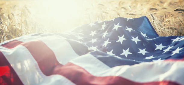 American flag lies on the golden wheat field stock photo