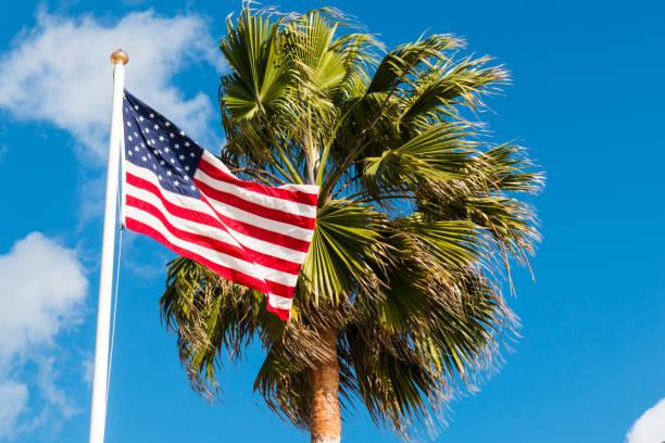 American Flag Waving Next to Palm Tree stock photo