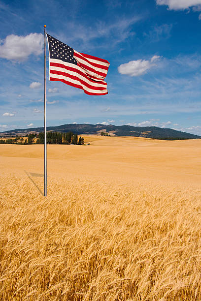 American Flag with Wheat Fields stock photo